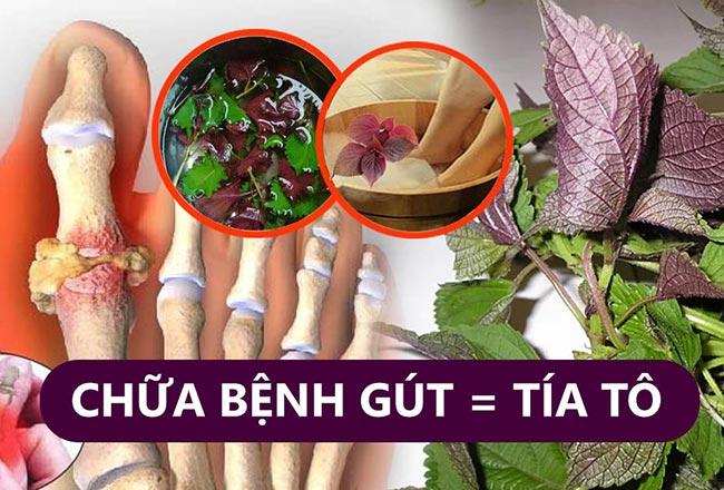 Cách chữa bệnh gout bằng lá tía tô