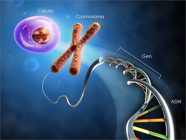 Yếu tố di truyền - Nguyên nhân gây thoái hóa cột sống