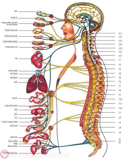 Các bệnh lý xương khớp gây đau cổ vai gáy