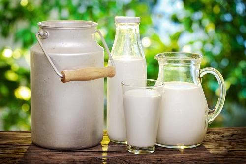 Uống sữa bò chữa bệnh thoát vị đĩa đệm