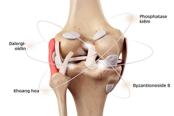 Cơ chế tác động Hoạt huyết Phục cốt hoàn trong điều trị thoái hóa cột sống thắt lưng