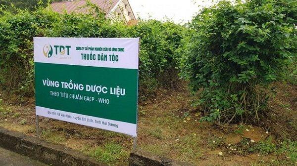 Một góc vườn dược liệu sạch tại Trung tâm Thuốc dân tộc